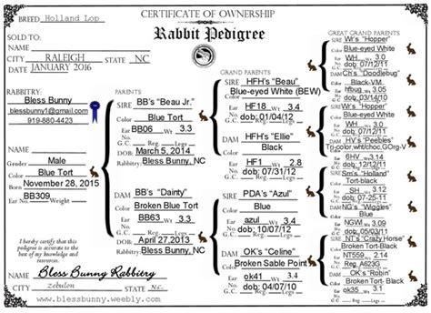 rabbit pedigree why pedigreed bless bunny rabbitry
