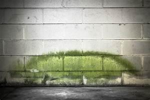 Schimmel An Der Wand : gr ner schimmel ursachen gegenmittel innotech gmbh ~ Frokenaadalensverden.com Haus und Dekorationen