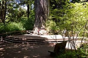 Redwood National & State Parks MowryJournal com