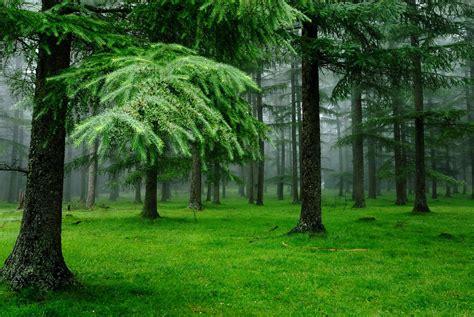 Download Green Trees Wallpaper 2048x1370  Wallpoper #406164
