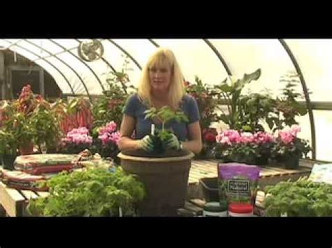 white flower farm how to grow tomatoes in a container