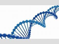 Buenas noticias para los hombres Niegan que el cromosoma