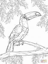 Supercoloring Coloring Toucan Bird Toco Printable Drawings Animal Drawing Adult Mandala sketch template