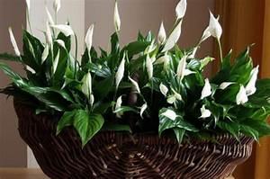 Pflanzen Zu Hause : 10 n tzliche pflanzen sorgen f r frische luft in ihrem zuhause ~ Markanthonyermac.com Haus und Dekorationen