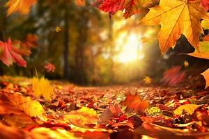 fall, foliage, map, predicts, the, best, time, to, see, leaves, at, their, peak, colors