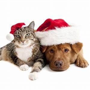 Wie Feiern Wir Weihnachten : so feiern sie weihnachten tiergerecht und sicher tierarzt dr h lter royal canin hills di tfutter ~ Markanthonyermac.com Haus und Dekorationen