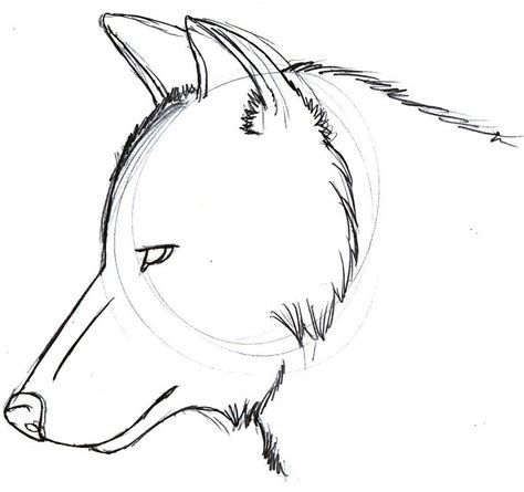 easy wolf drawings   clip art  clip