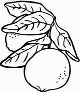 Lemon Coloring Pages Acorn sketch template