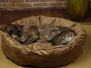dog beds large dog beds big shrimpy nest dog bed pets With big shrimpy dog beds
