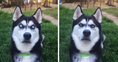 owner pretends  throw ball  captures  exact moment