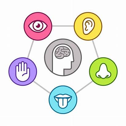 Sensory Senses Taste Five Clipart Sentidos Brain