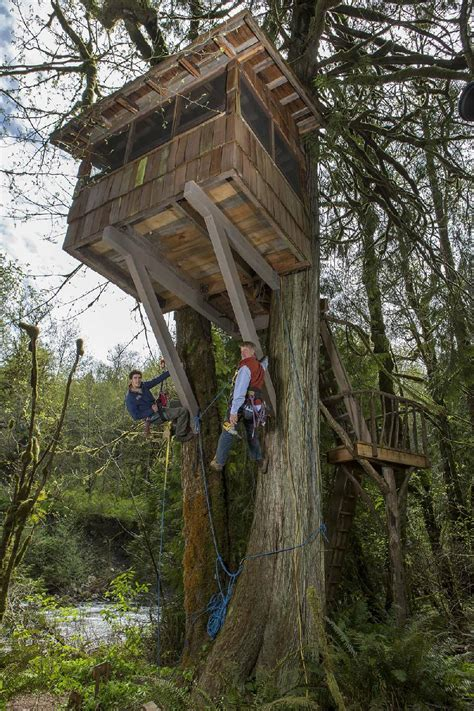 tv column animal planet  designs  treehouse