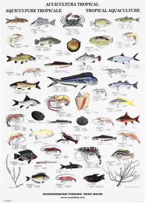 fish names indo pacific tropical fish la tene maps