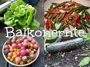 Gemüse Auf Dem Balkon : kanaltrailer balkonernte gem se auf dem balkon anbauen ~ Lizthompson.info Haus und Dekorationen