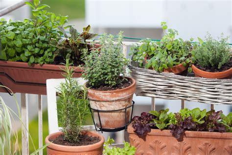 Gemüse Im Balkonkasten im balkonkasten gem 252 se anbauen 187 was gedeiht im blumenkasten