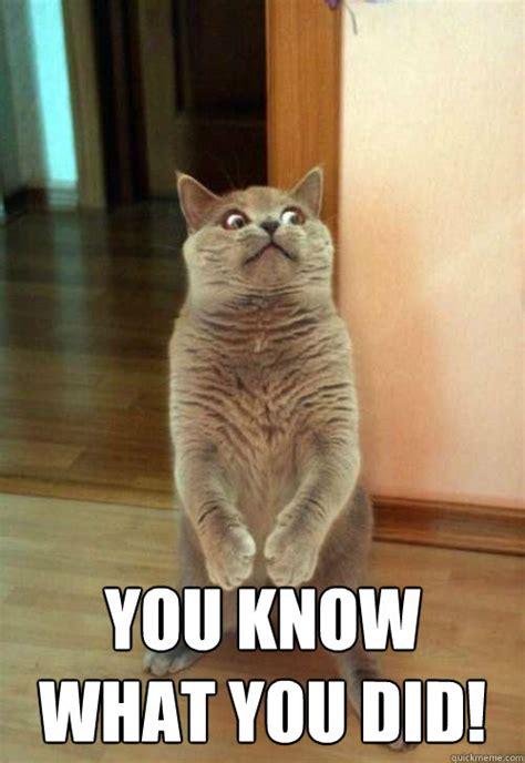 Fuck You Cat Meme - the fc meme thread page 32 fc vaporizer review forum