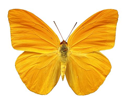 multimedia gallery   butterfly sees image  nsf