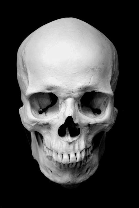 Still Life, by richardr | 두개골, 해골 아트, 해골