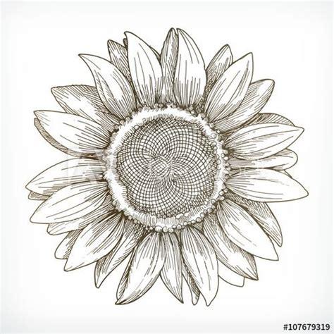 sunflower sketch hand drawing vector illustration phrases en  girasoles dibujo