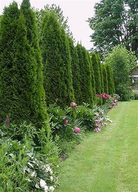Backyard Privacy Landscaping by Best 25 Privacy Landscaping Ideas On Privacy