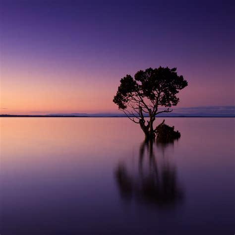 wallpaper sunset calm tree reflection  nature