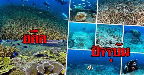 กองหินโลซิน ปะการังเขากวางสวยที่สุดในไทย อายุนับล้านปี วันนี้เหลือแค่เศษซาก
