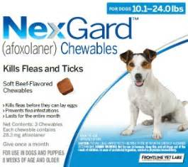 nexgard for cats introducing nexgard veterinarians piscataway new jersey