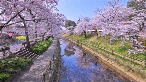 picture tokyo japan sakura canal spring nature stairway