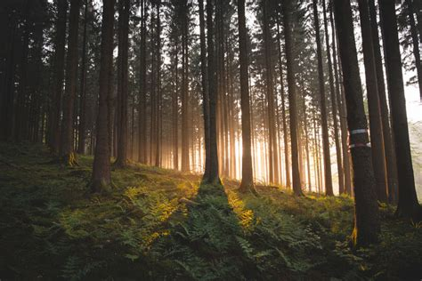 forest  sunrise pictures   images