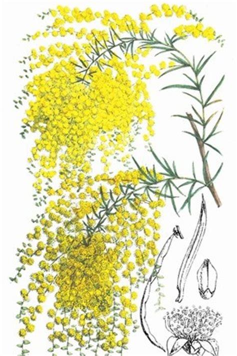 diffenbaugh il linguaggio segreto dei fiori il linguaggio segreto dei fiori