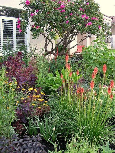 drought tolerant shrubs drought tolerant plants gardening pinterest