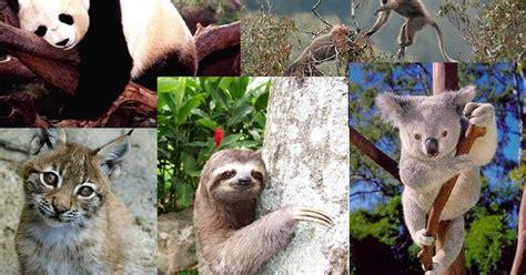 biodiversidad en el peru especies peruanas amenazadas