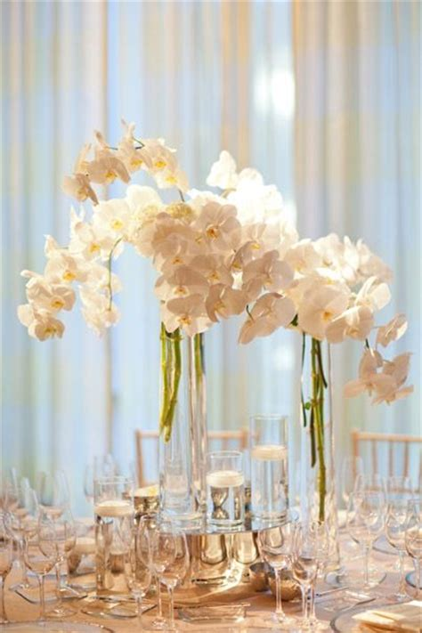 Best Images About Phalaenopsis Orchids Arrangements