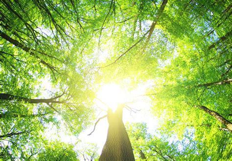 ljubavi biljaka svjetlost biljke natur ja mensch olvi ljudima povjerenju prema allah heist aider vous aidosti suomalainen slika nexus articolo
