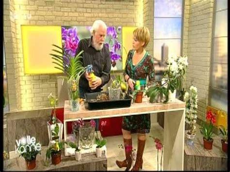 Topfpflanzen Giessen Und Richtig Pflegen by 26 Orchideen Richtig Pflegen Gie 223 En Und Behandeln Die