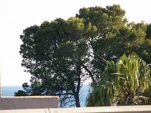 hotel celo garden paguera spanien hotel anmeldelser With katzennetz balkon mit morlans garden mallorca paguera