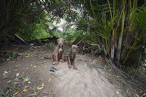 Photos Tell The Sad Story Of Stray Dogs Dumped At 39Dead