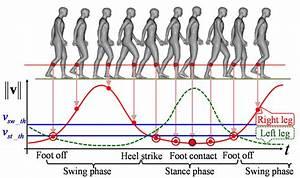 Image Of The Gait Speed Diagram During Walking