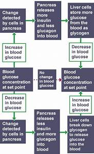 How Much Insulin To Take Chart Bbc Bitesize National 5 Biology Control And