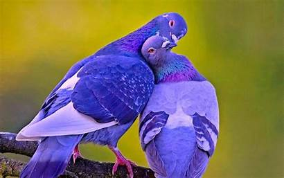 Birds Wallpapers Lovely Awesome