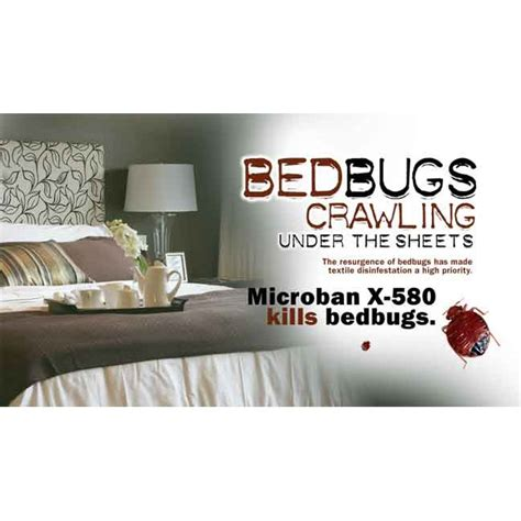 Bed Cure by Pictures Bugs Pictures Bugs On Bed Bugs How To Treat Them