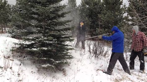 100 christmas tree hunting in the hunting themed