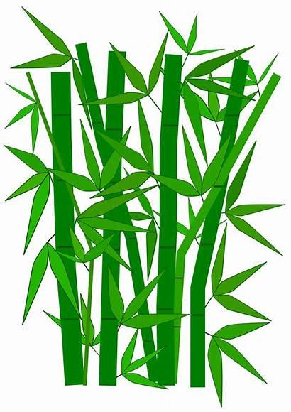 Bamboo Precondition Clipart Flower Panda Clip Tree