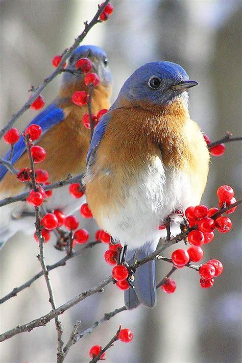 Pretty Birds Birds