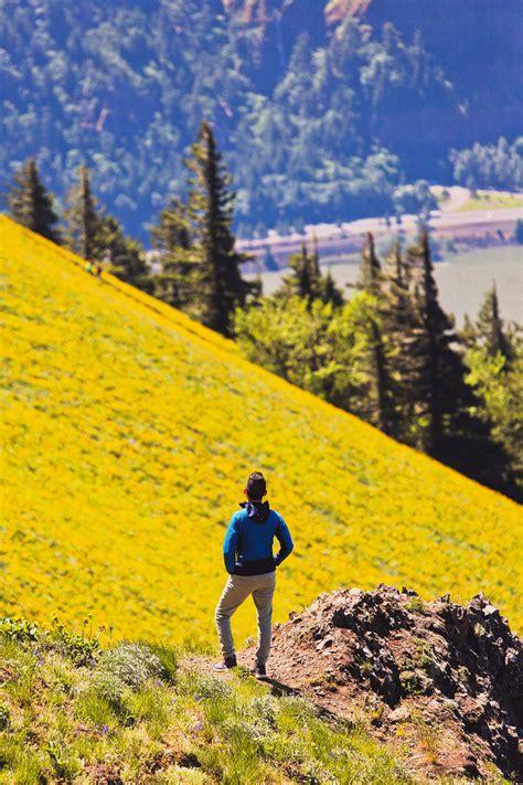 dog mountain hike washington  wildflowers