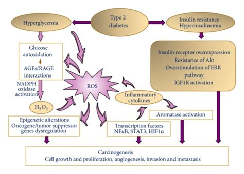 pathways  oxidative stress   diabetes