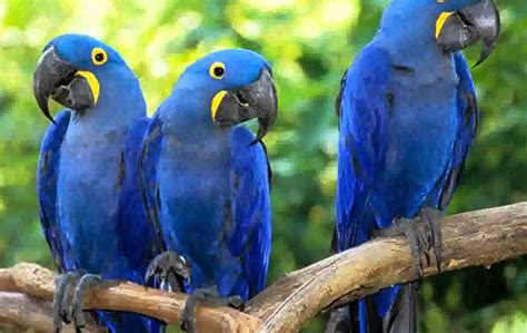 macaw parrot macaw parrot pictures youtube