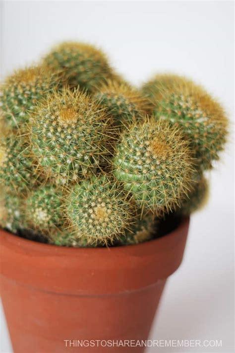 don t sit on a cactus preschool desert activities 187 410 | cactus