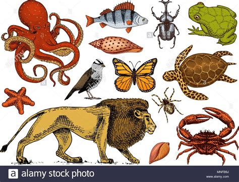 Set of animals Reptile and amphibian mammal and insect