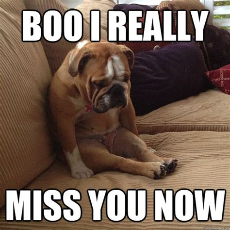 Missing You Memes - i miss you animal memes image memes at relatably com